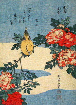 Hokusai Black naped Oriole